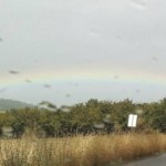 As we approached Adelsheim Winery a rainbow appeared, one end squarely falling over their vines. Nice.